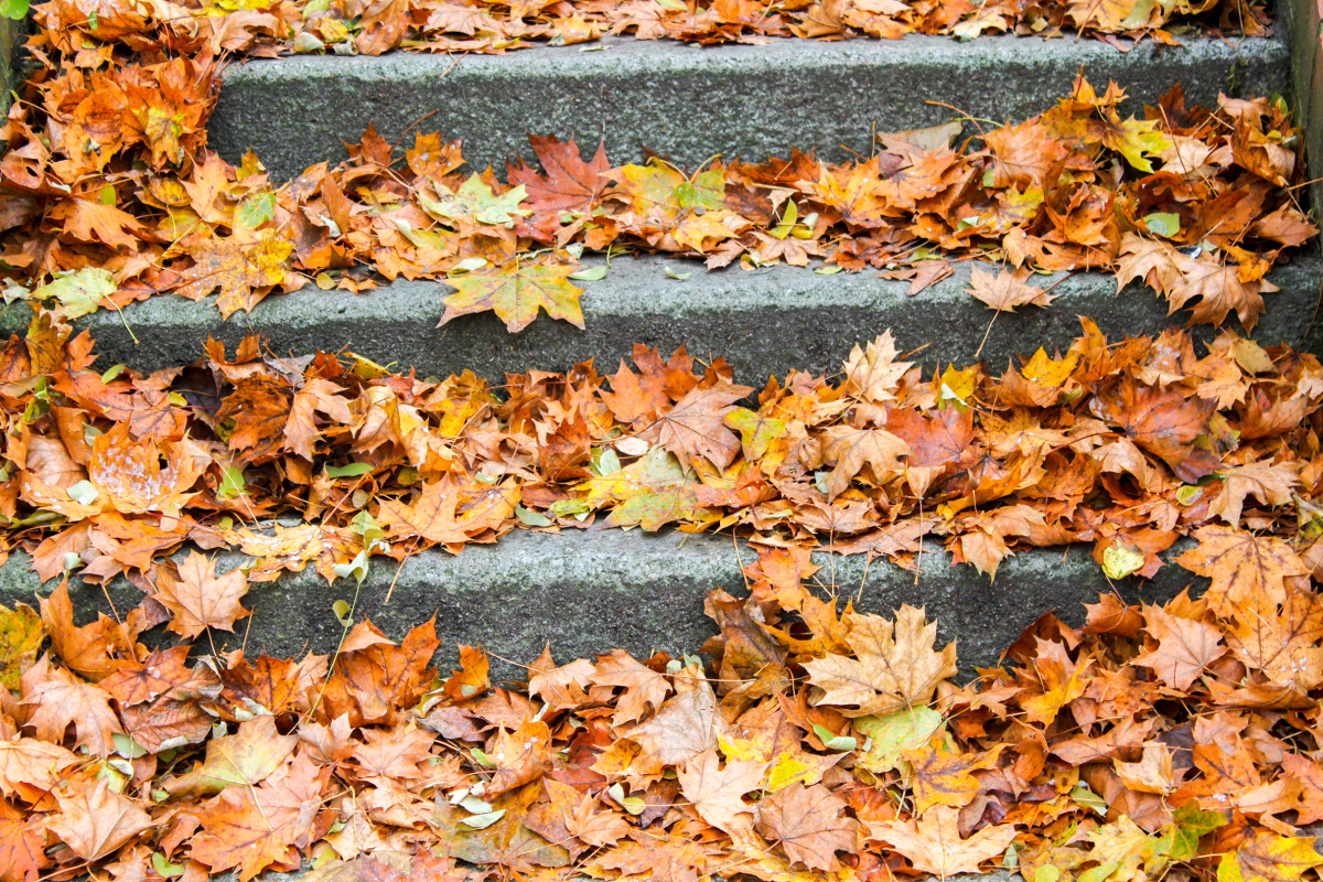 Leaves on the Steps