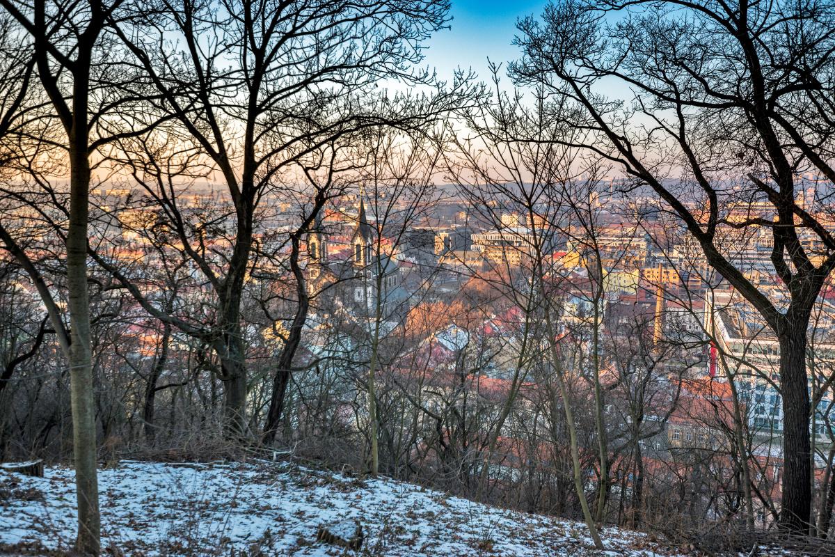 Prague Through Winter Trees