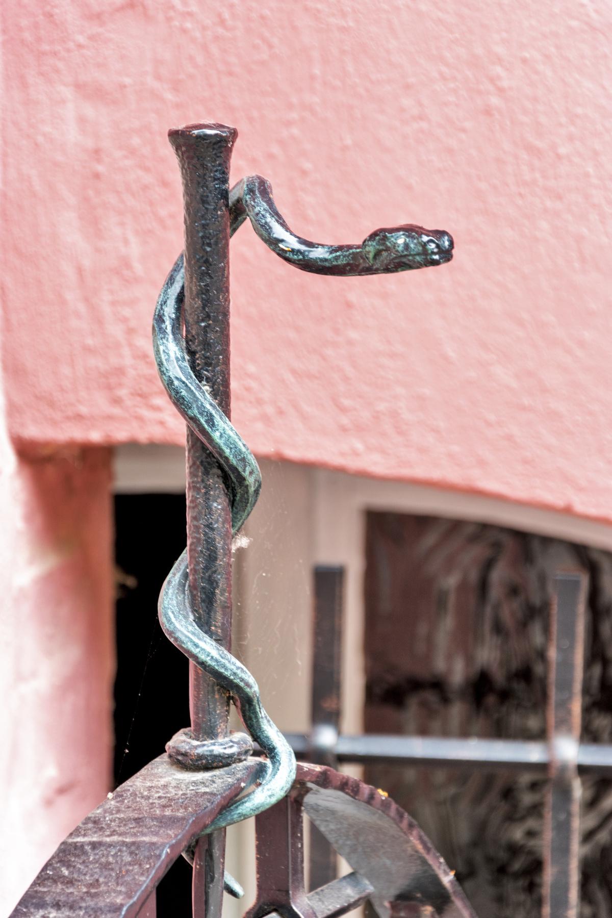 Doctor's Snake