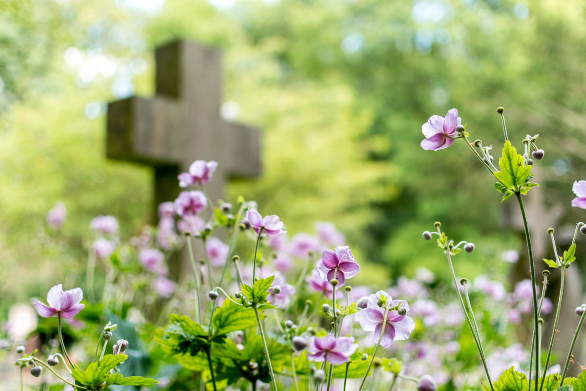 Cemetery Blooms