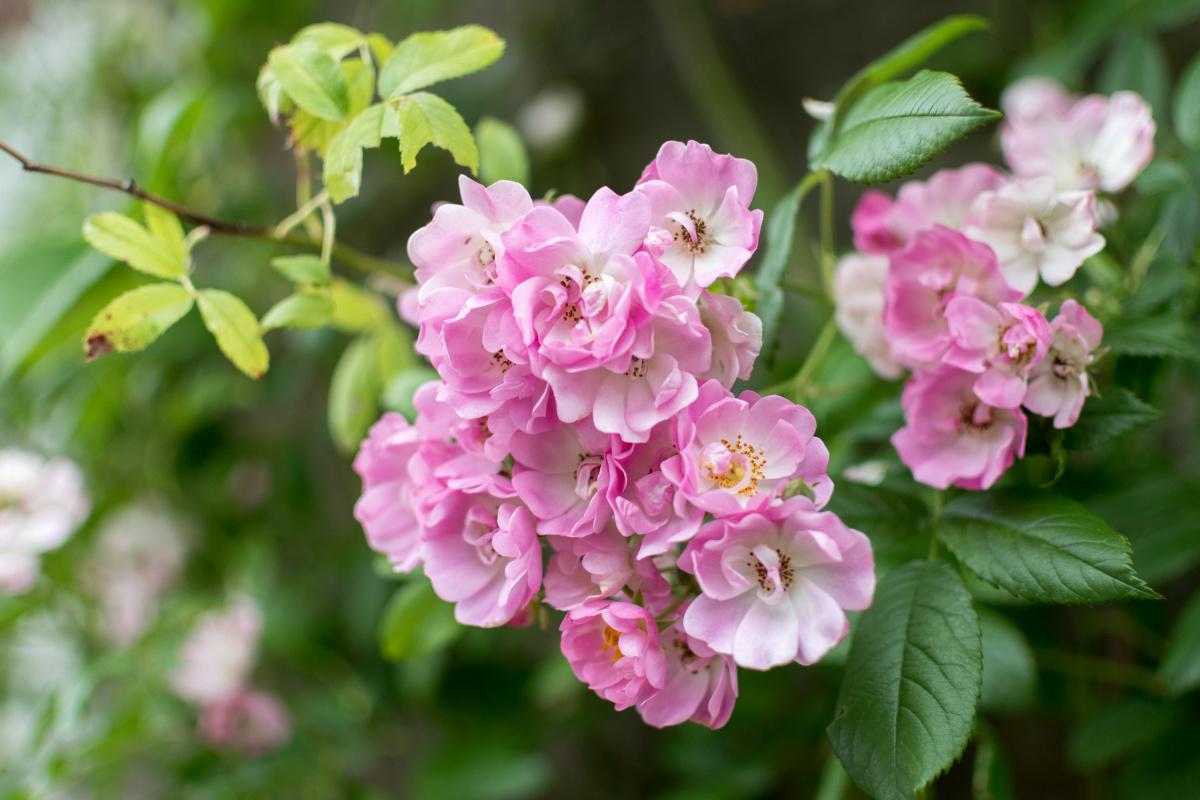 Inverary Flowers