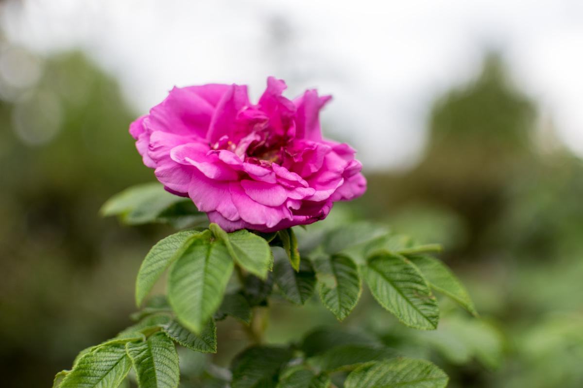 Flower at Saint Alban's