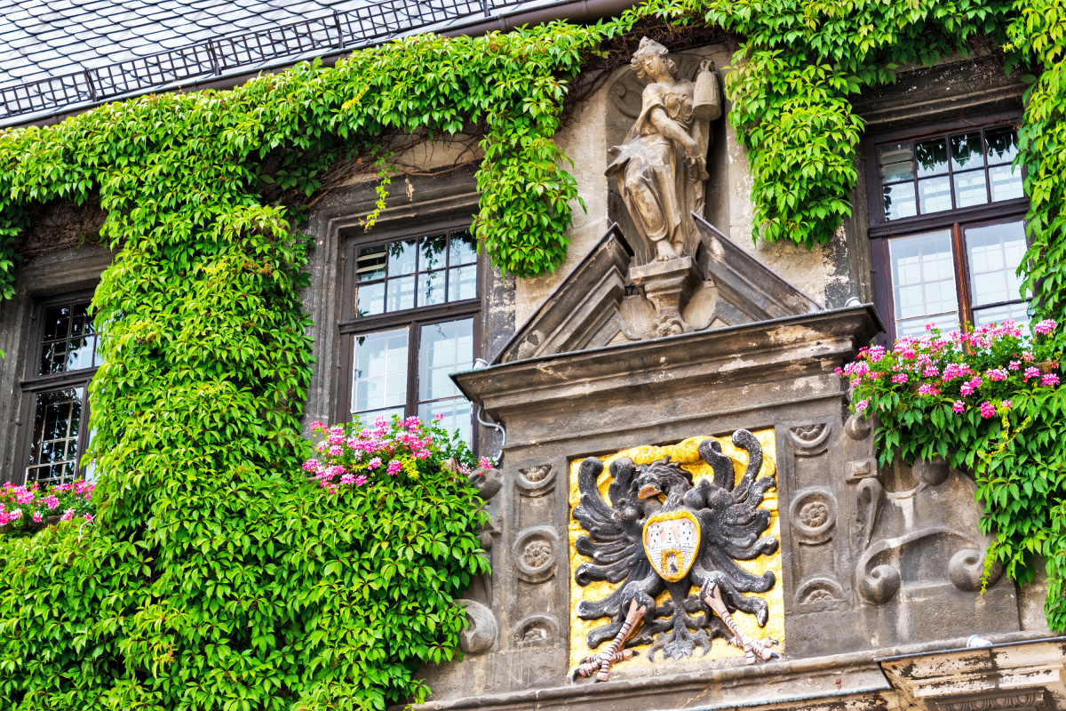 Vines of the Rathaus