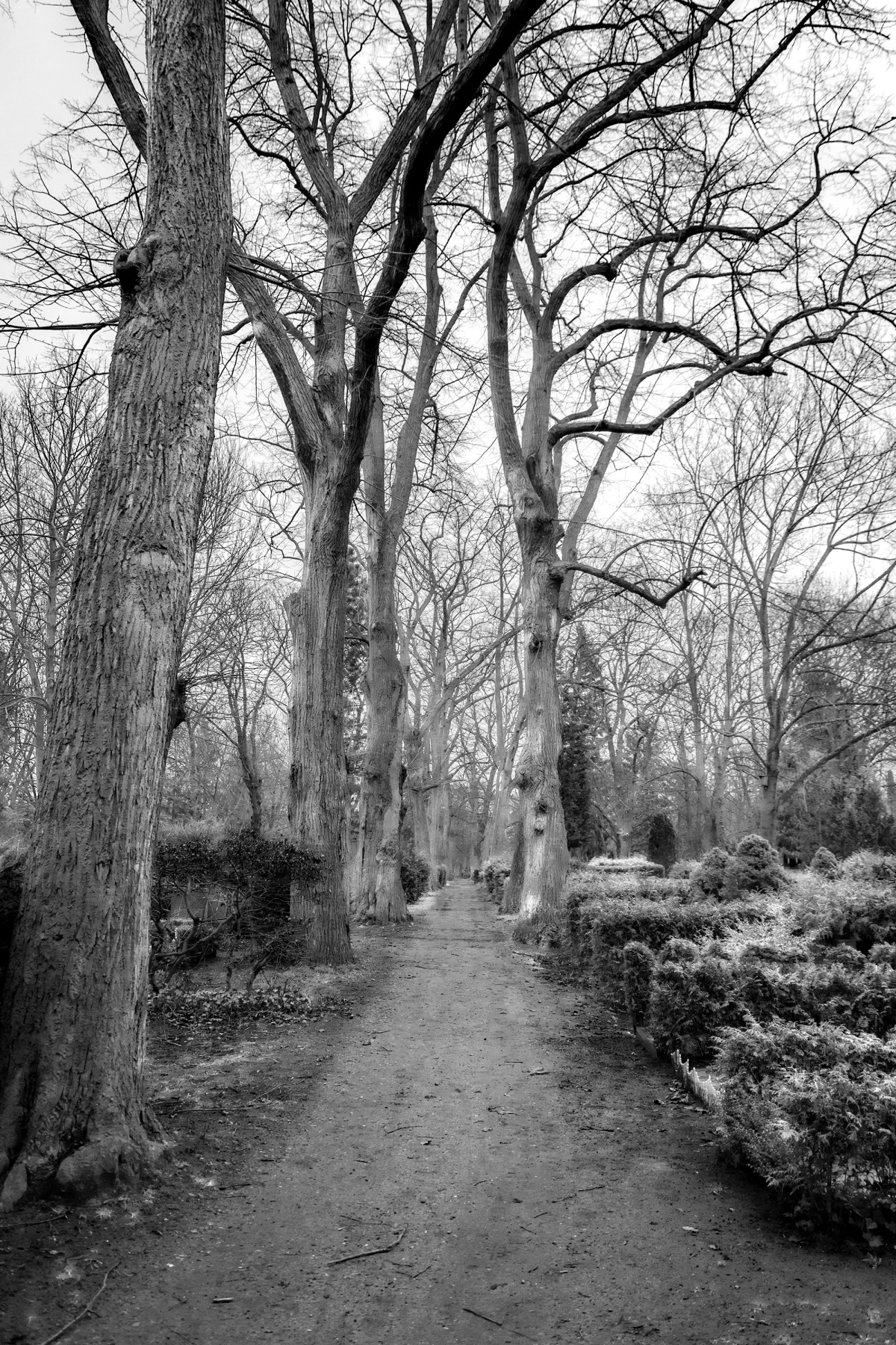 Cemetery Trees in Berlin