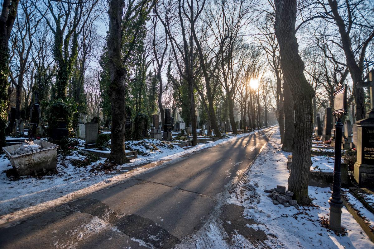 Cold Winter's Evening in Olšanske Hřbitov