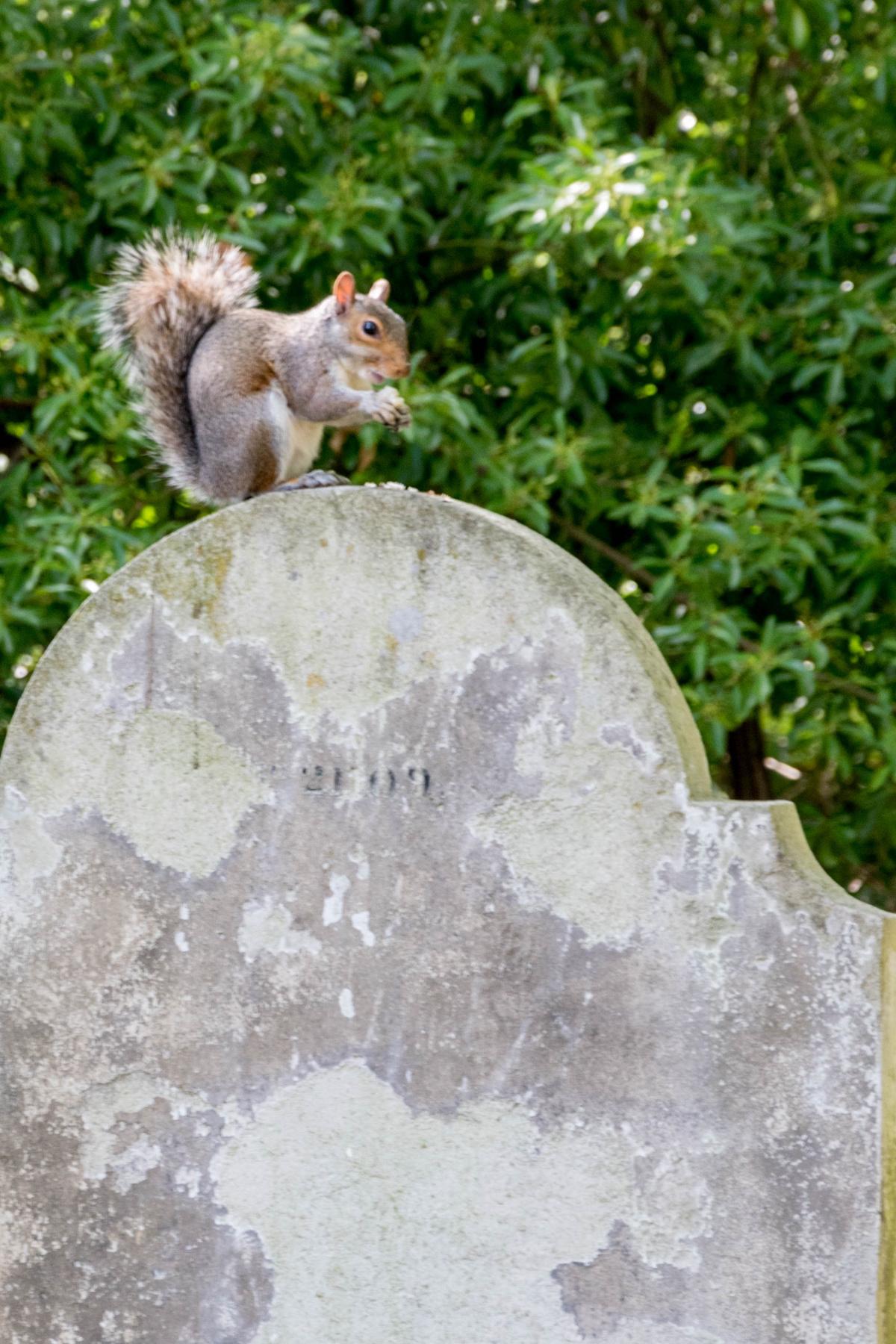 Tomb Squirrel