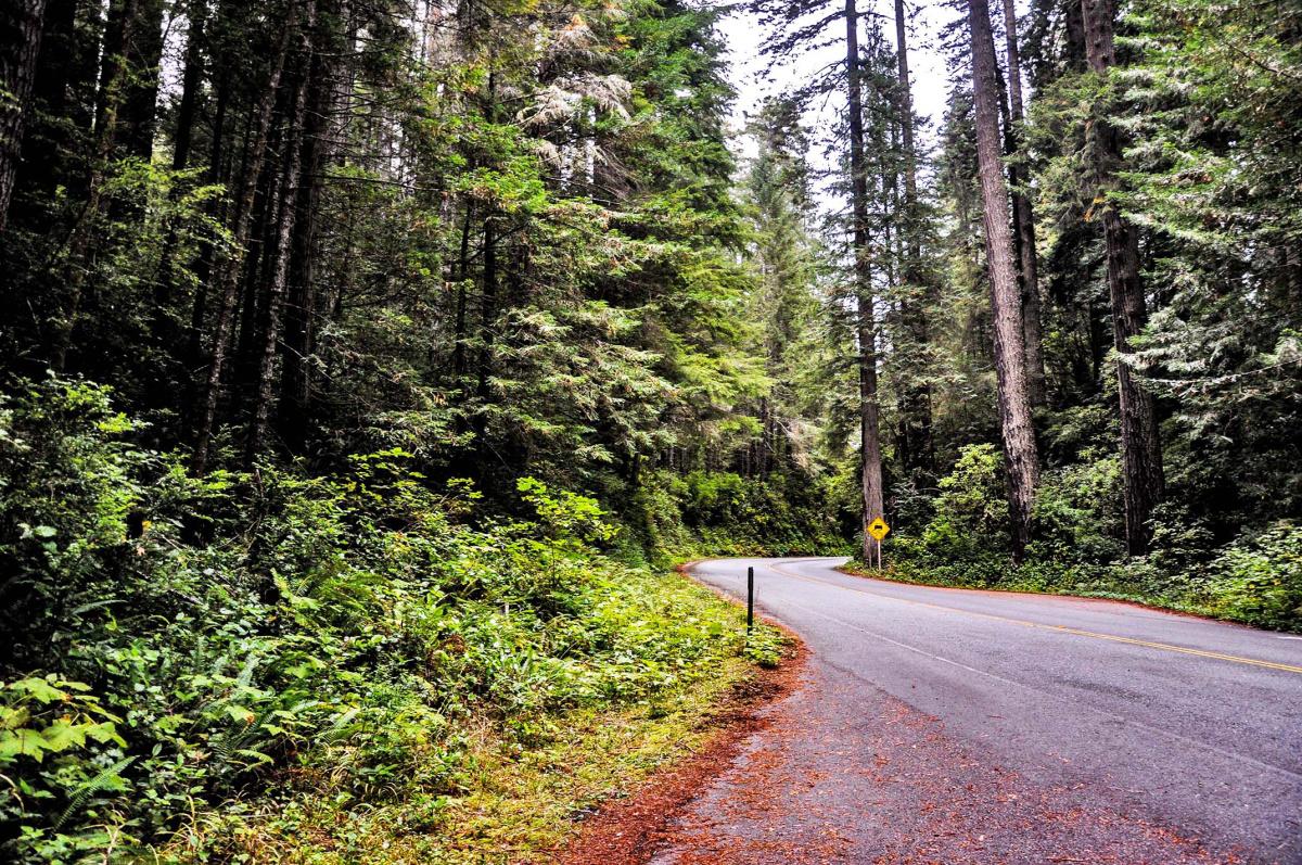 Redwoods Entrance